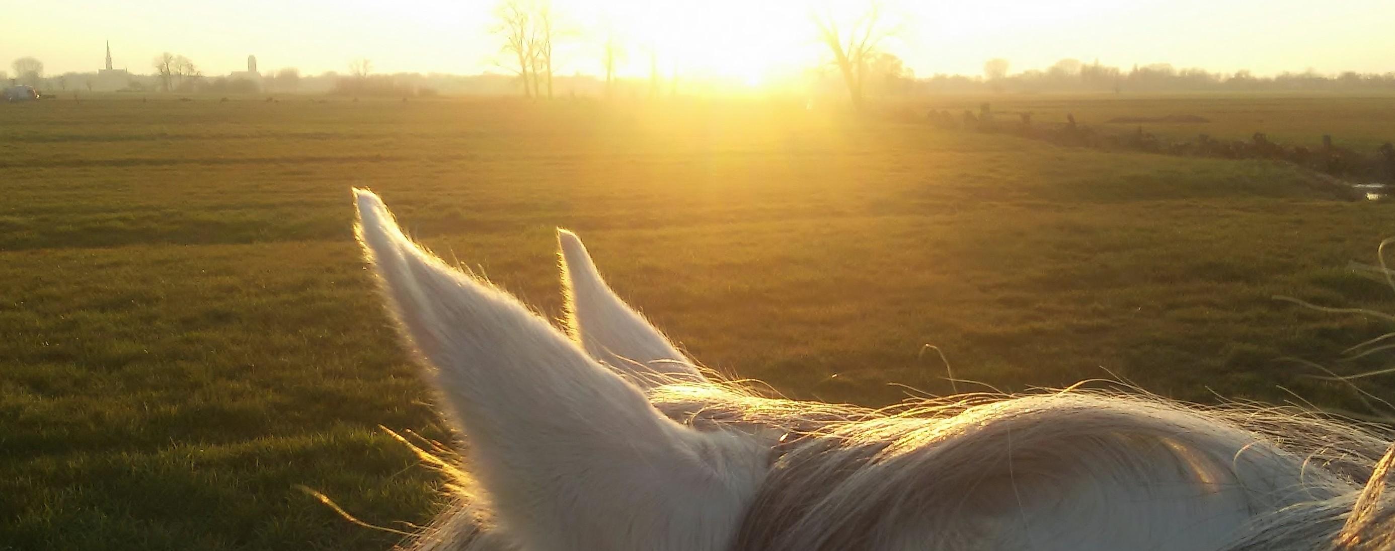 PaardEnOntwikkeling